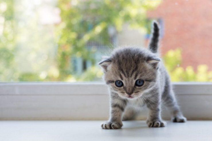 kitten-anxiety_canna-pet-e1490739366728-1024x683